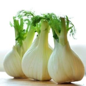 three bulbs of fresh fennel